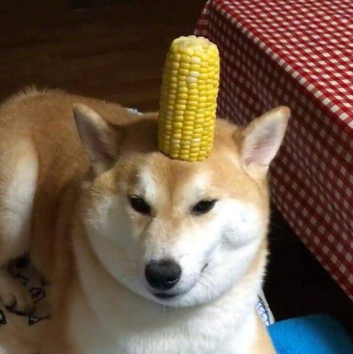 corndoggo